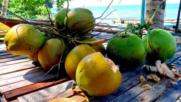Fresh coconuts at PHP25 each