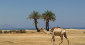 Vacation Spot in Egypt