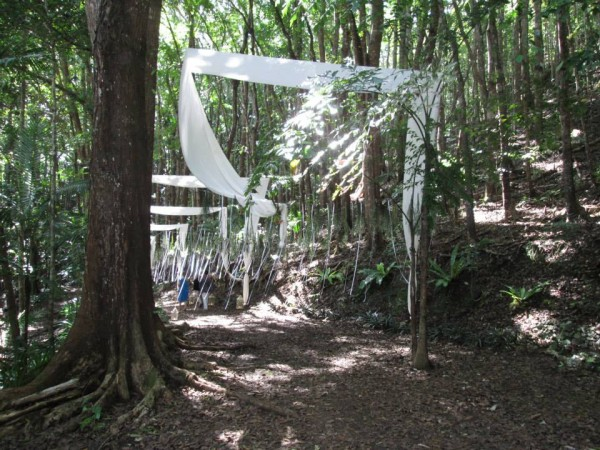 A fantasy procession within Manmade Forest's dense Mahogany trees