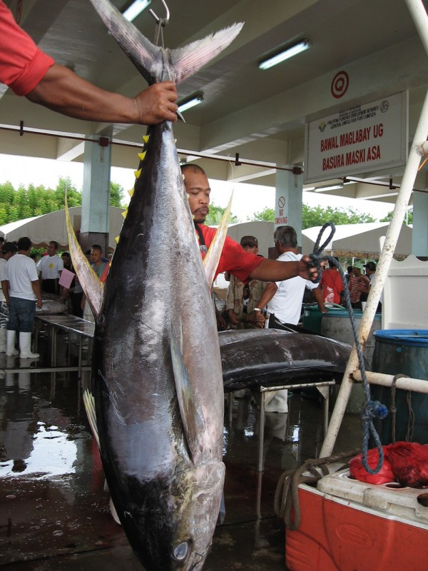 Export-quality tuna