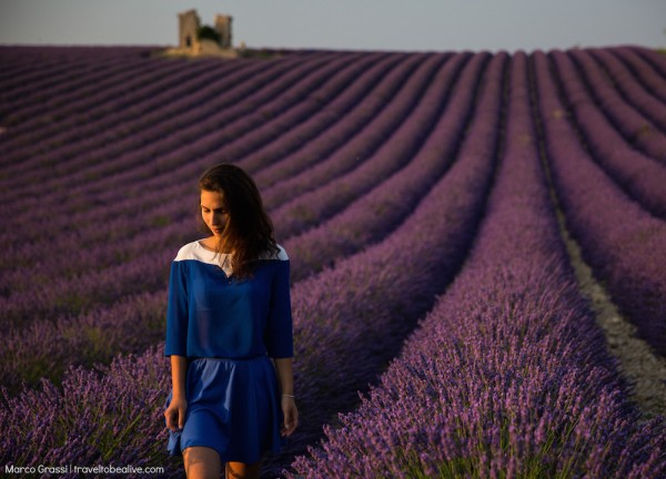 Walking through the lavender fields in France