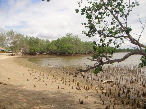 A quiet mangrove beach in Buenavista