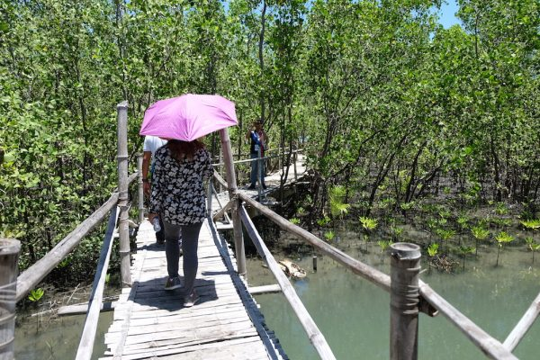 Silonay Mangrove Conservation Area Tour