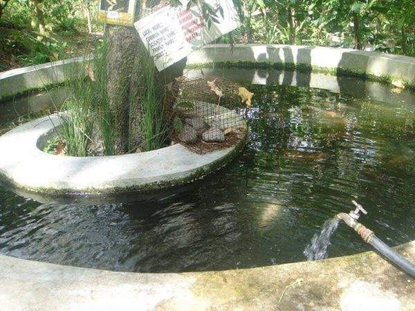 The fish pond