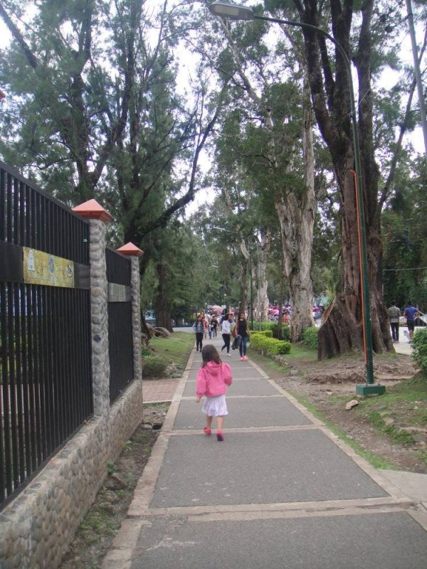 Lush trees towering the pedestrian road just outside the park