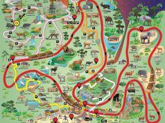 Night Safari - Pokemon Go Map