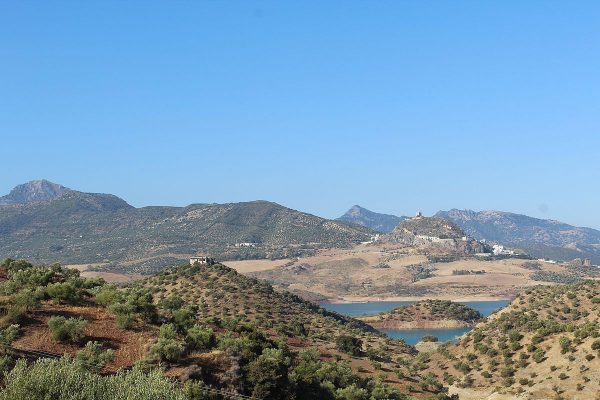 Olive groves with castle across the valley – classic Andalusia scenery