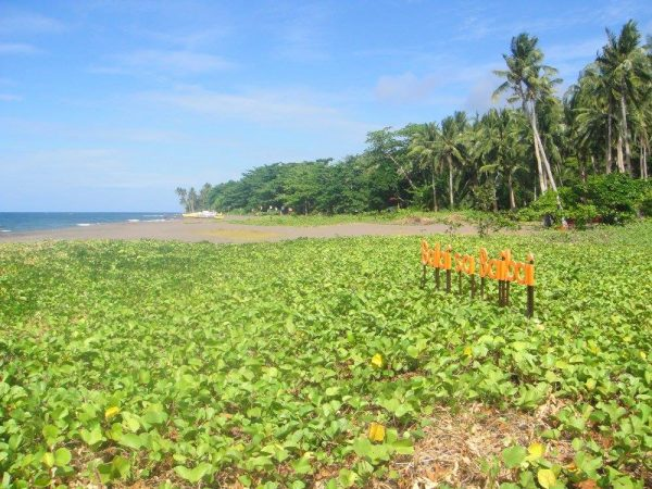 Grass is greener on Balai sa Baibai's volcanic sands