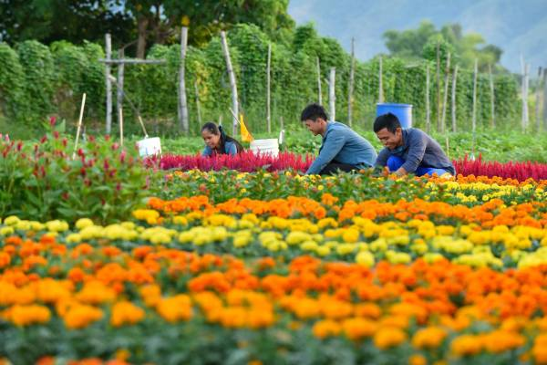 Flower Farm in Pangasinan photos by Allied Botanical Corporation
