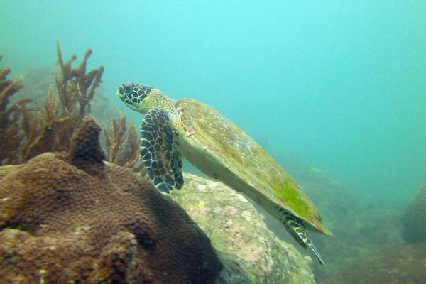 Diving in Koh Samui Thailand