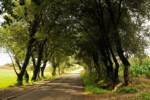 Shady trees like these along the route give you a welcome respite from the sun.