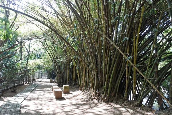 Bamboo covered riverbank of the bird sanctuary