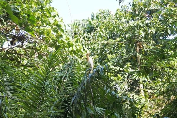 Bird Watching is more fun at Baras Bird Sanctuary