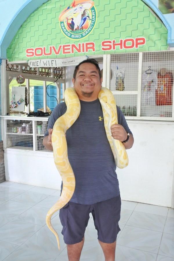 Photo with an Albino python