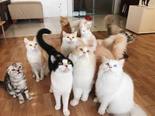 Le Cat Coffee Shop - Cat Cafe Las Pinas