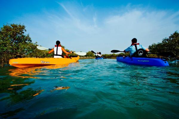 Mangro kayaking tours