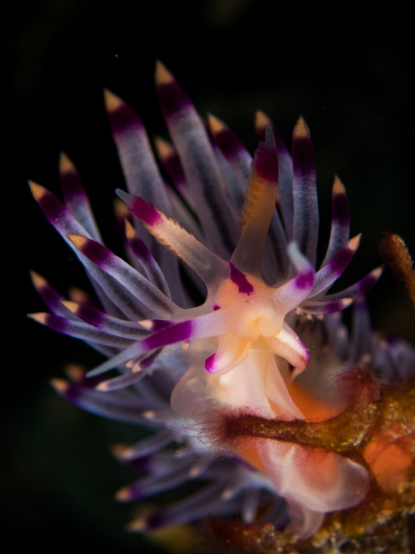 Compact-Nudibranch Category 3rd place Jonathan Christopher Veridiano