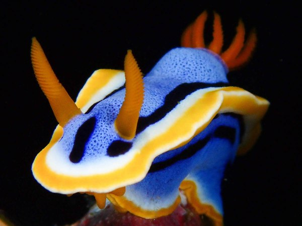 Compact-Nudibranch Category first place Ronald Dalawampu