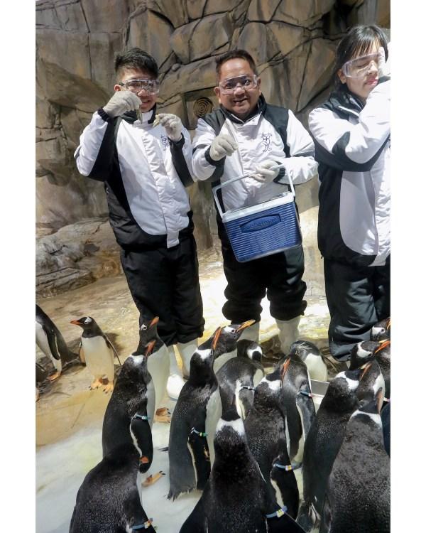 Fresh Penguin Treats