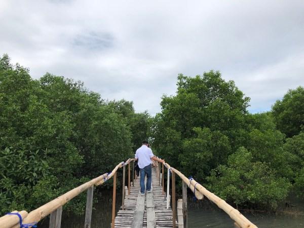 Mangrove Area in Sasmuan Pampanga