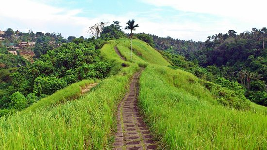 Campuhan Ridge Walk via Tripadvisor