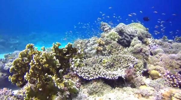 Photo from www.coralmovement.org.