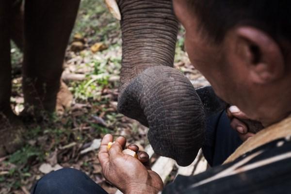 1 Elephant Jungle Sanctuary 7 - Chiang Mai LQ