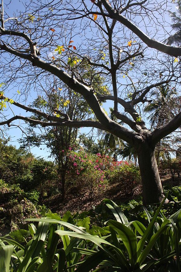 Andromeda Botanical Gardens by Postdlf via Wikipedia CC