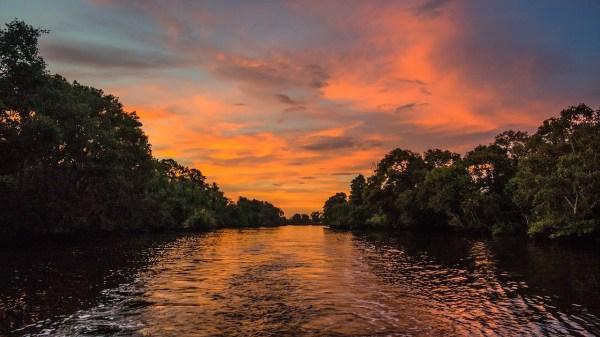 Mangrove Safari