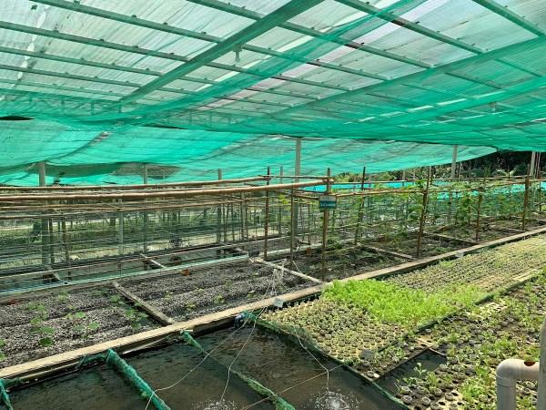 Aquaphonics Farm in Iloilo