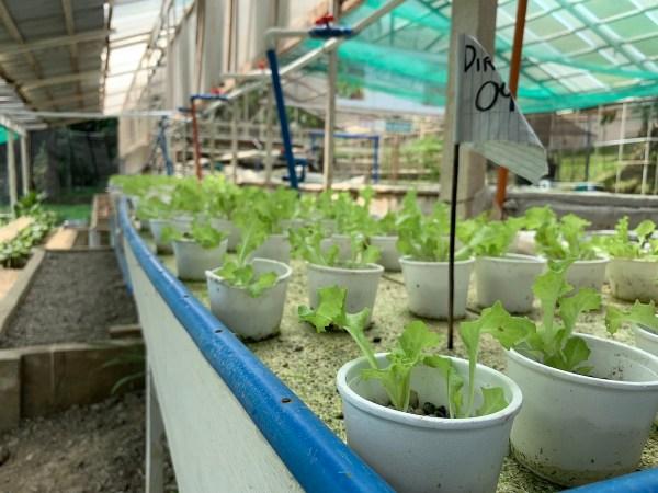 Aquaphonics and Organic Farm
