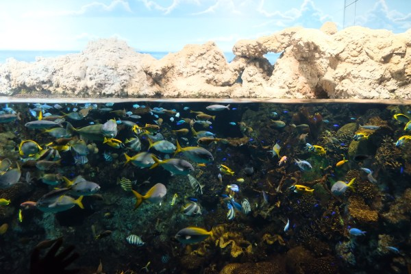 Colorful Marine life at Osaka Aquarium