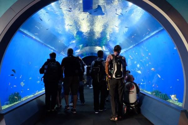 Tunnel at Osaka Kaiyukan Aquarium