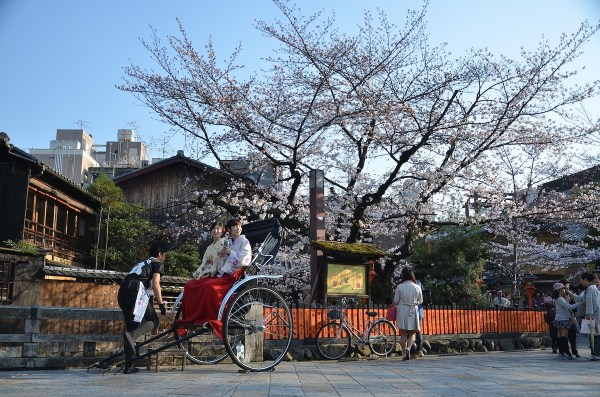 Cherry Blosson in Kyoto