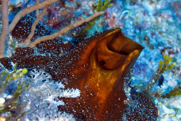Sponges provide a vitalhabitat for marine organismslikesmall fishes.© OCEANA/UPLB