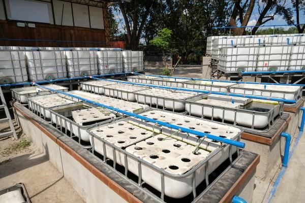Aquaponics Farming in Pampanga