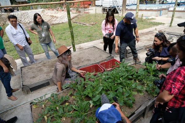 Harvesting vegetables at Tibbys Farm by Mac Dillera - NPVB