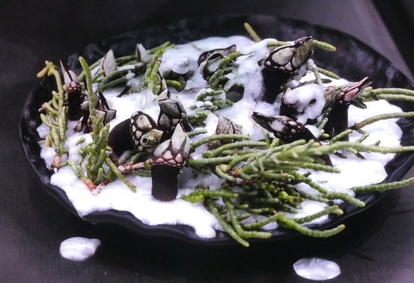 after the liquid salt solidifies and cooks the barnacles – Amazing!