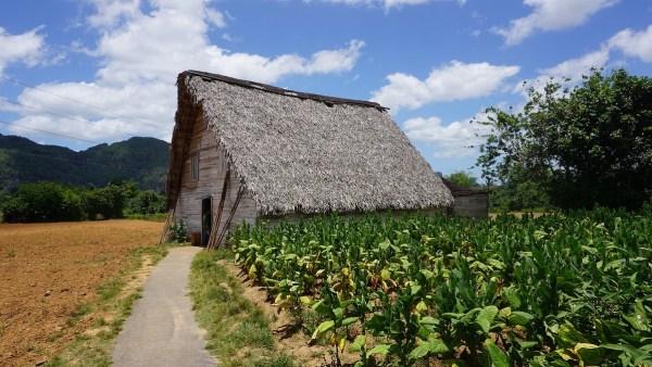 Vinales Tobaco Fields in Cuba