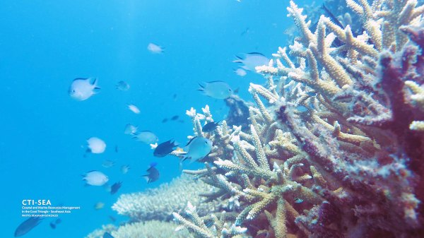 Quimbaludan Island Coral Garden photo by Coastal and Marine Resources Initiative via Flickr