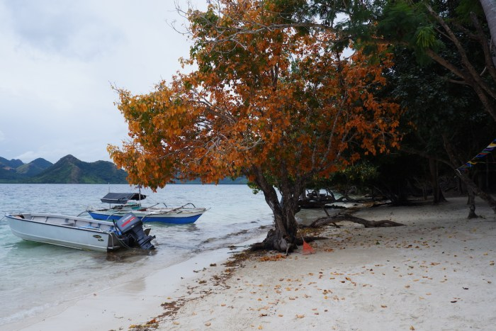 Beach trees at Diatoy Island