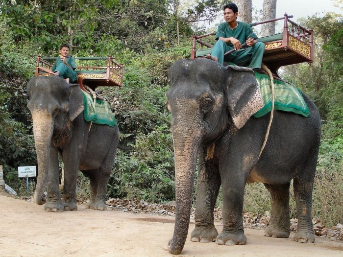 Elephant Rides Are Now Banned at Cambodia's Angkor Wat