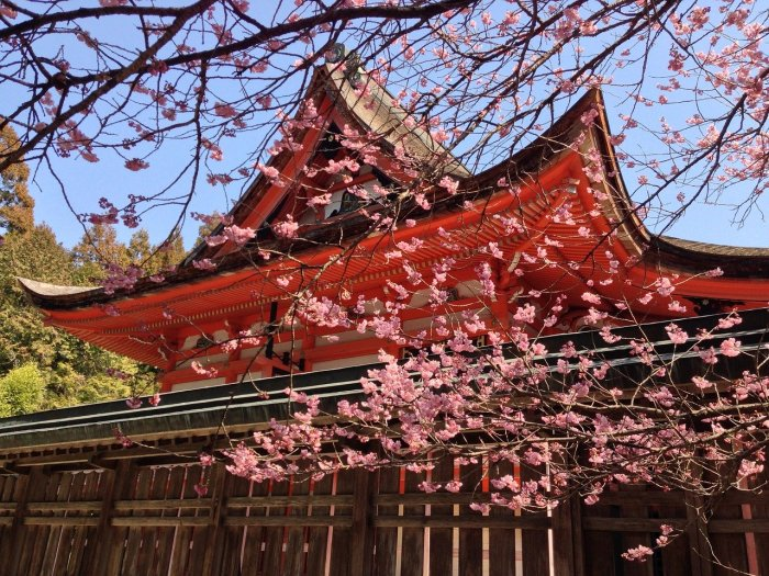 2020 Cherry Blossom Forecast for Japan