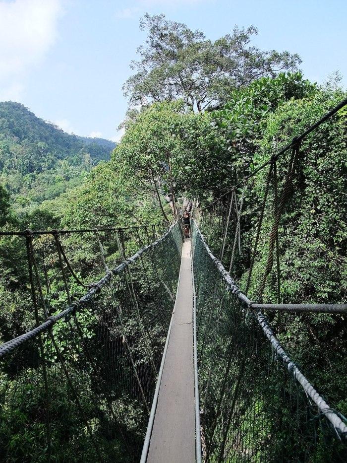 Taman Negara Park photo by RoB via Wikipedia CC