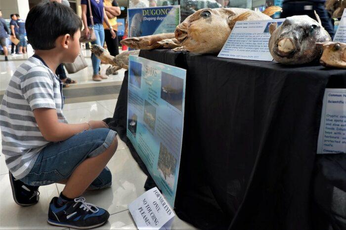 Sarangani Marine Museum exhibit