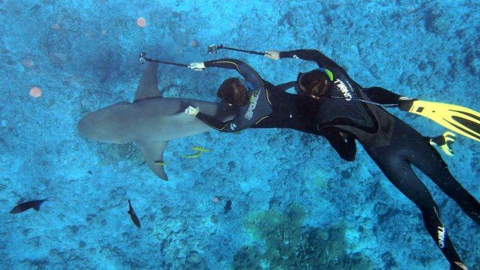 Scuba Diving in Bora Bora by @f_r_pierrot via Unsplash