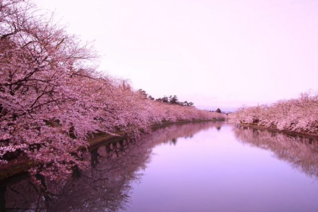 Moat and Cherry Blossoms in Hirosaki photo via Depositphotos