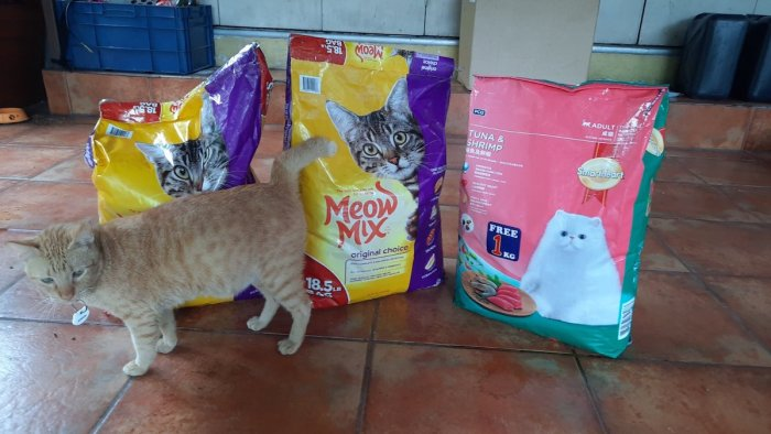Cat food for the animals under the care of PAWS