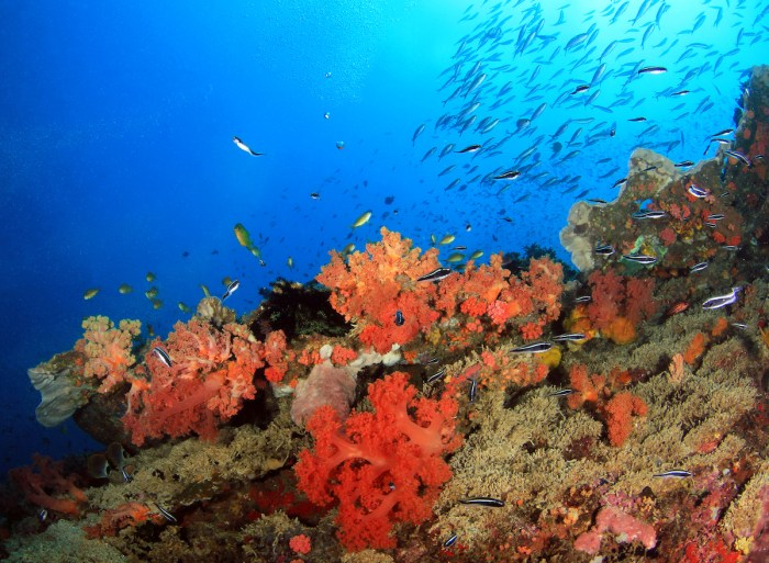 Colorful Coral Reef with Schools of Fish against Blue Water in Pescador Island photo via DepositPhotos