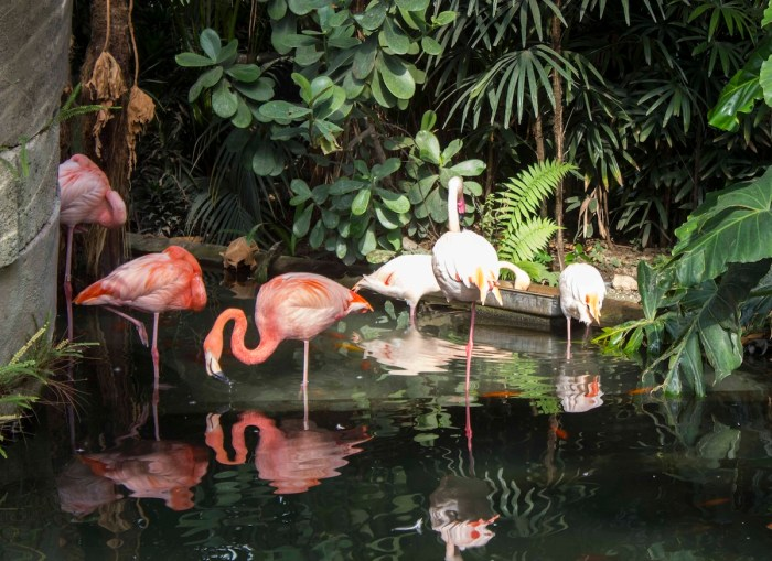 Group of pink flamingos in Parc Phoenix in Nice photo via DepositPhotos